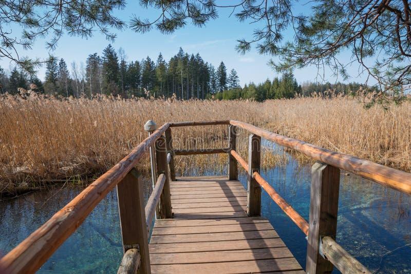 Деревянный променад с взглядом к голубому fount в болоте стоковые изображения rf