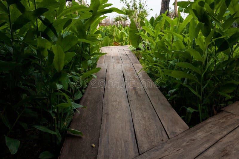 Деревянный путь над рекой и через тропический сад стоковые изображения
