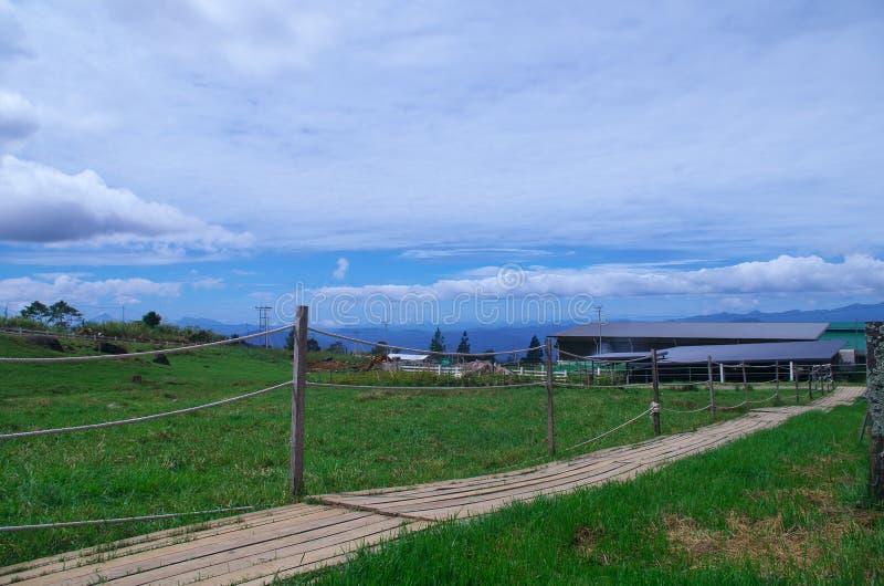 Деревянный путь планки стоковое фото