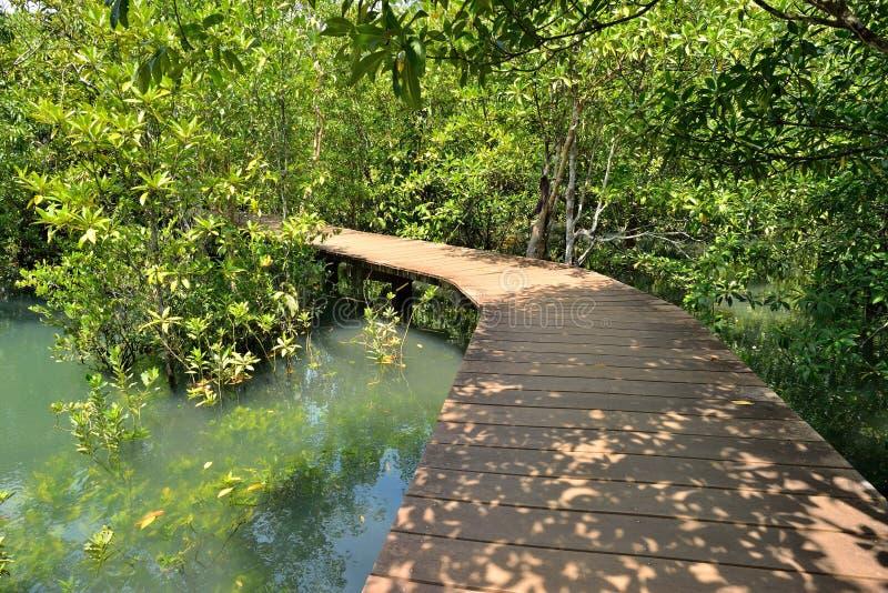 Деревянный мост в пуще мангровы стоковые изображения rf