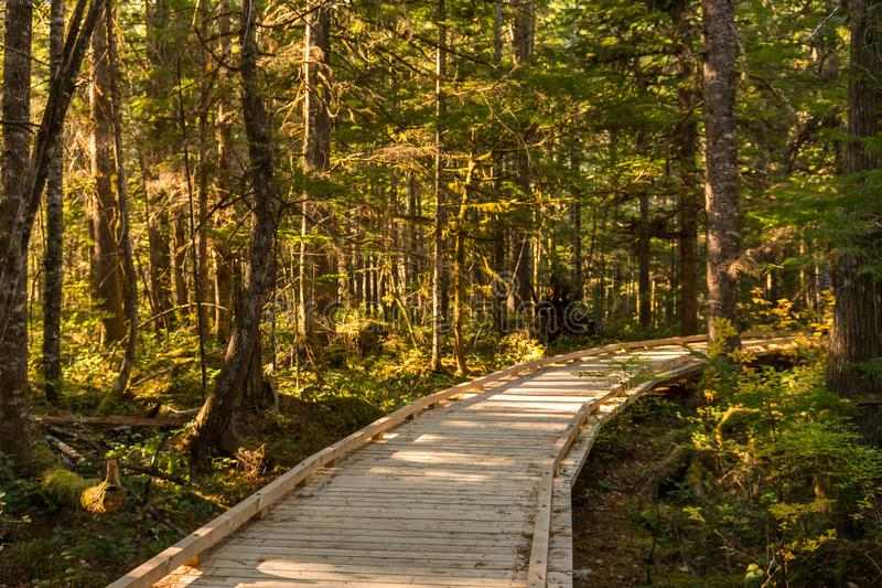Деревянный след рядом с центром для посетителей северных каскадов, окруженным деревьями стоковое фото rf