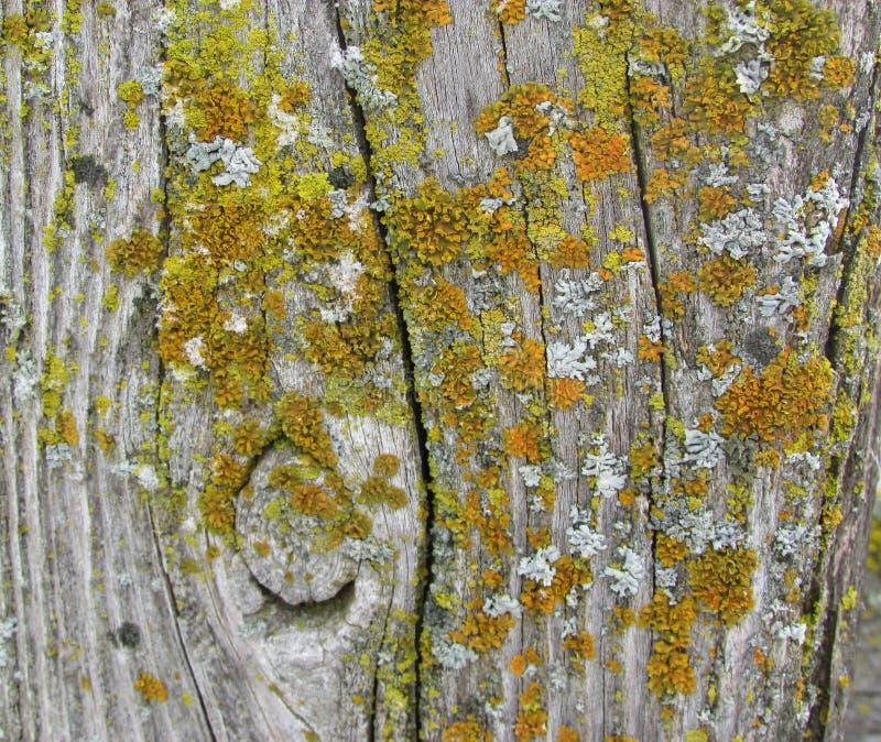 Деревянный столб загородки с мхом стоковое изображение rf