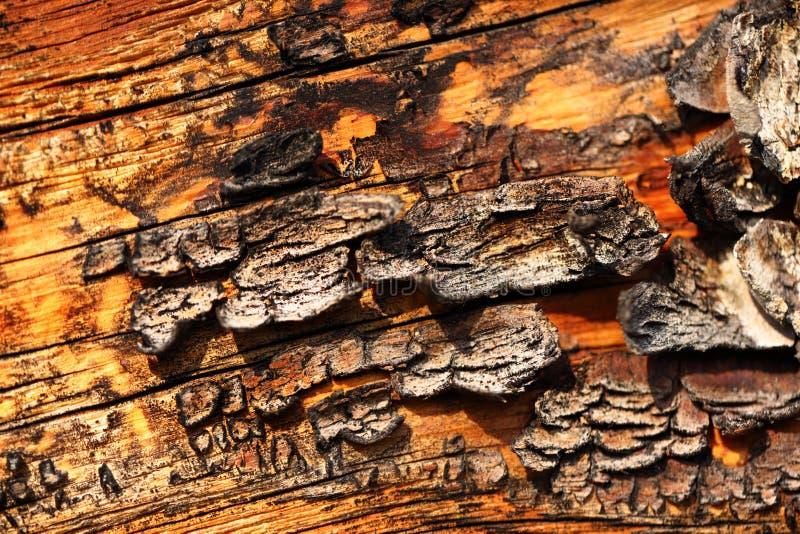 Деревянный треснутый текстурированный материал стоковые изображения