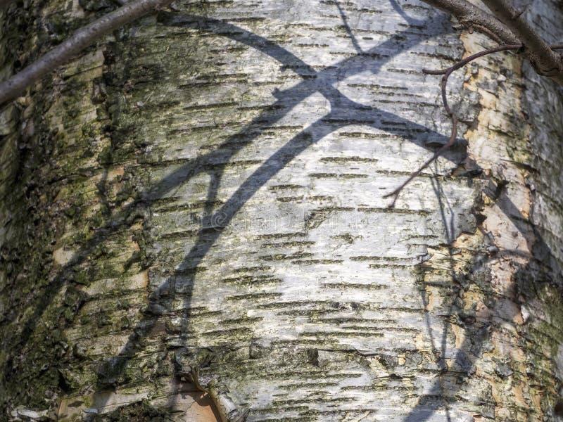 Деревянный фон с параллельными линиями и узор ветвей на березовой коре стоковое изображение rf