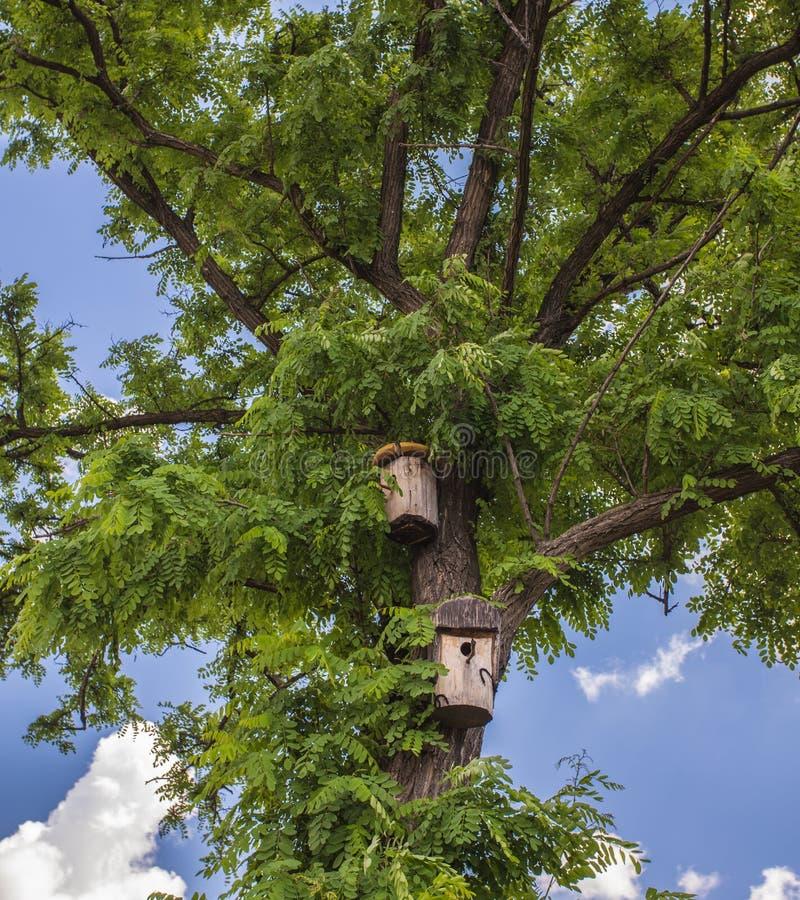 деревянный birdhouse на дереве березы стоковые фотографии rf