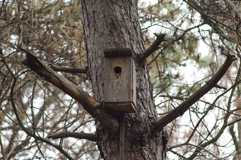 Деревянный birdhouse на сосне, ландшафт леса стоковое изображение rf