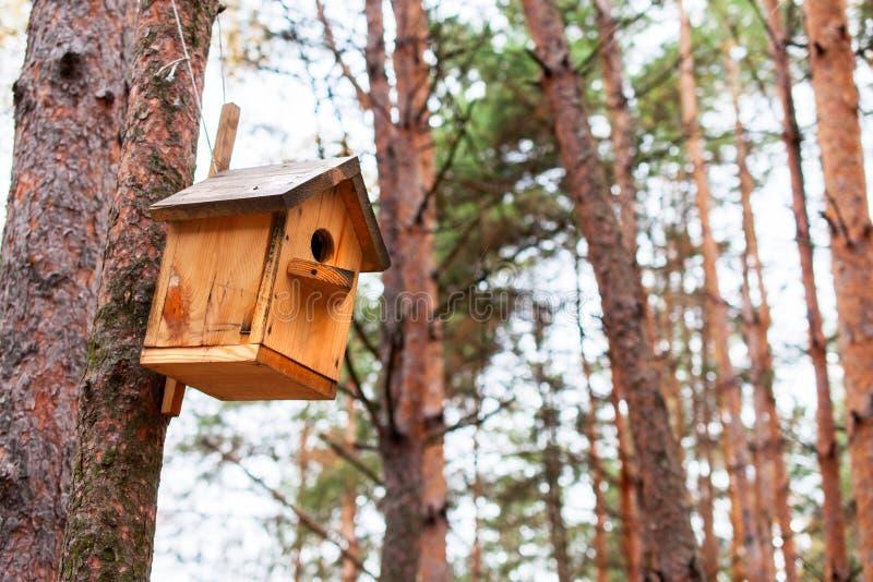 Деревянный birdhouse на сосне стоковое изображение rf