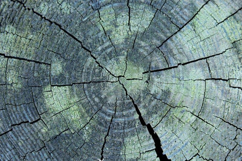 Деревянный Cutaway стоковая фотография