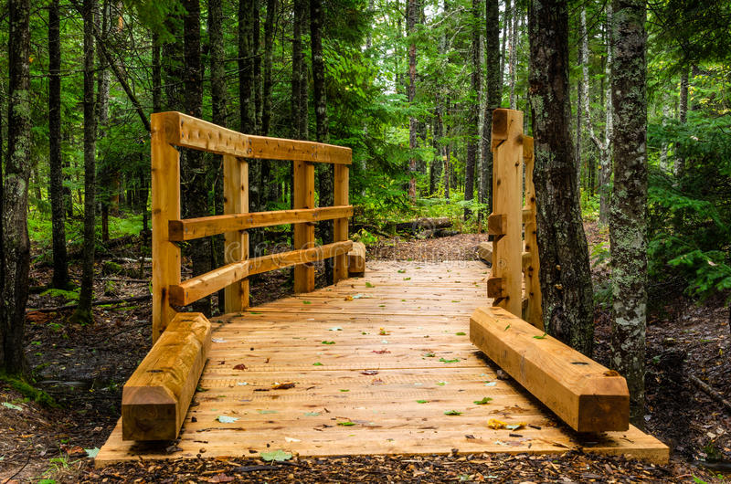 Деревянный Footbridge в лесе стоковые фотографии rf