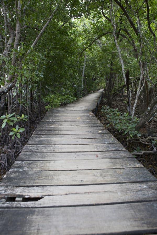 Деревянный footbridge в лесе мангровы, Сейшельские островы стоковые фото