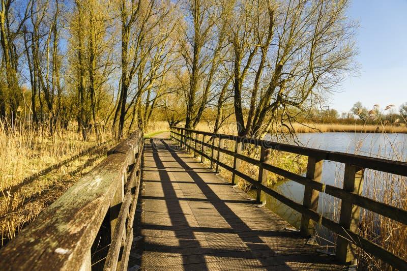 Деревянный footbridge в парке стоковые фотографии rf