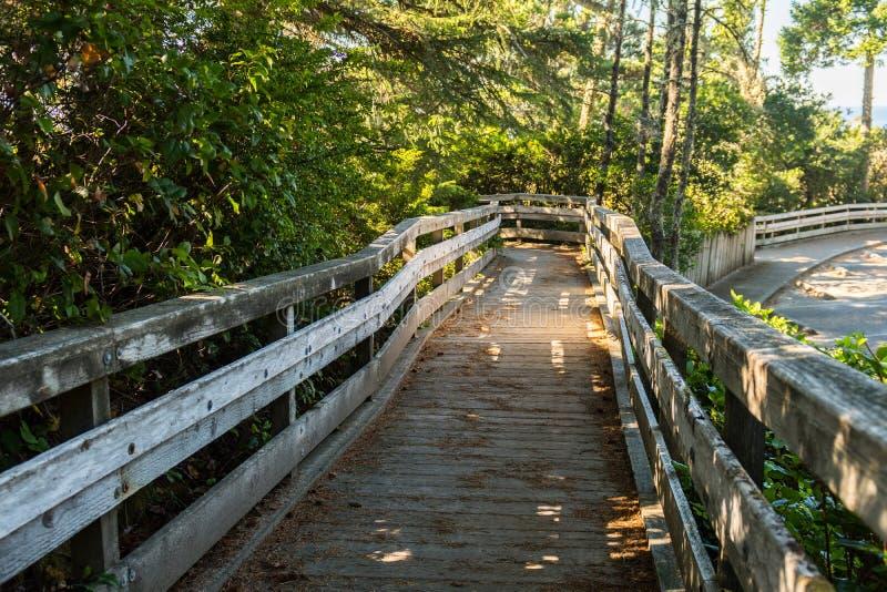 Деревянный footbridge между дерев-выровнянное которое приходит вниз от высокой точки зрения около дюн Орегона стоковое фото