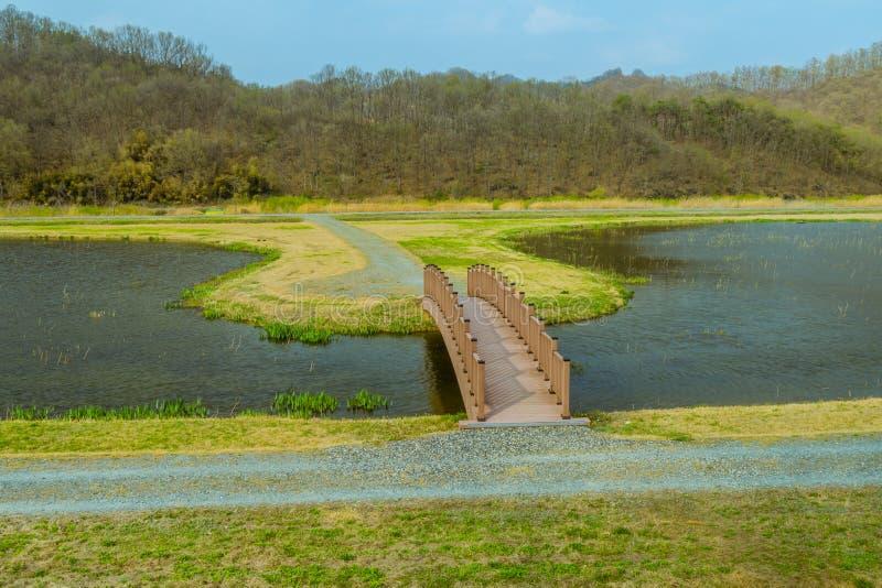 Деревянный footbridge над прудом стоковые фотографии rf