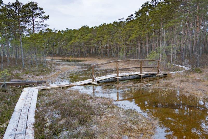 Деревянный footbridge на болоте стоковое фото rf