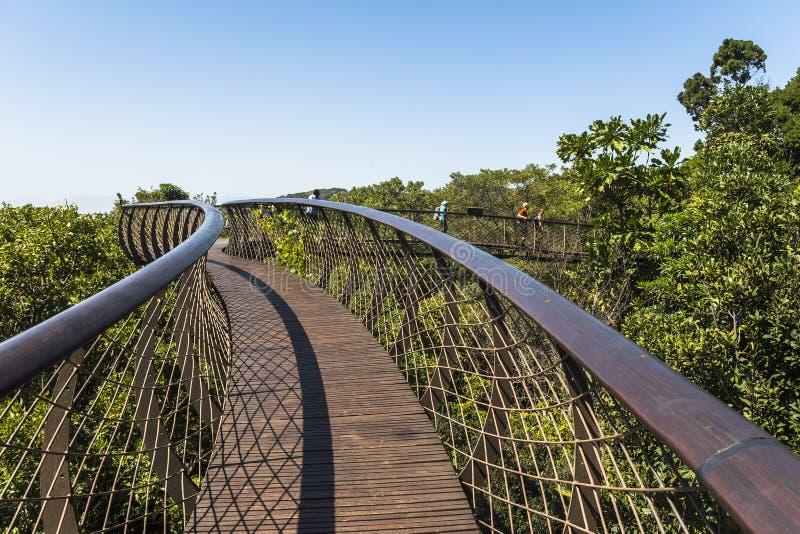 Деревянный footbridge над деревьями в саде Kirstenbosch ботаническом, Кейптауне стоковые изображения rf