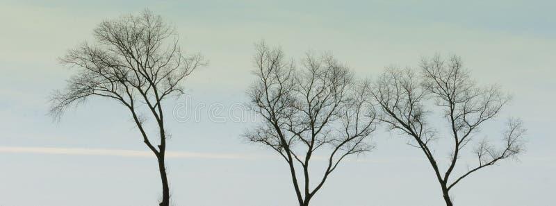 3 дерев-верхней части в небе стоковые изображения rf