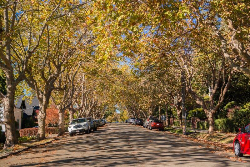 Дерев-выровнянная улица в жилом районе на солнечный день осени стоковые изображения rf
