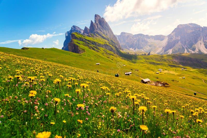 Держатель Seceda, зеленые поля и цветки в доломитах Альп стоковые фотографии rf