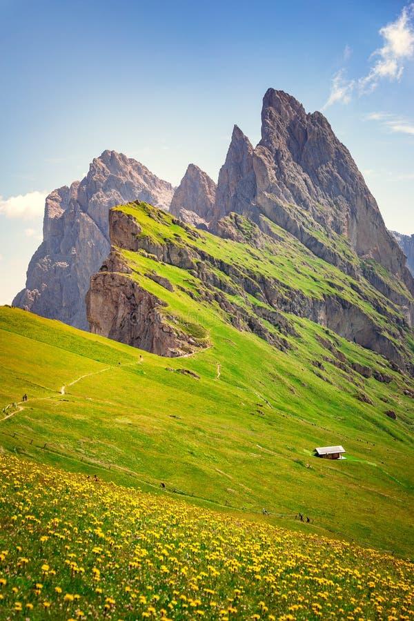 Держатель Seceda, зеленые поля и цветки в доломитах Альп стоковое фото rf