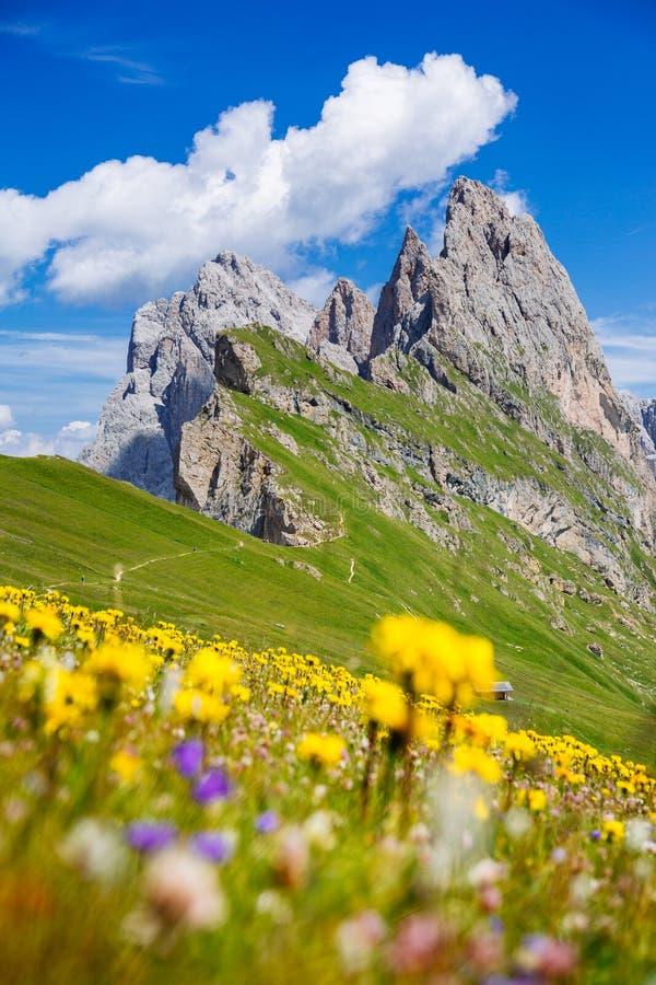 Держатель Seceda, зеленые поля и цветки в доломитах Альп стоковое фото