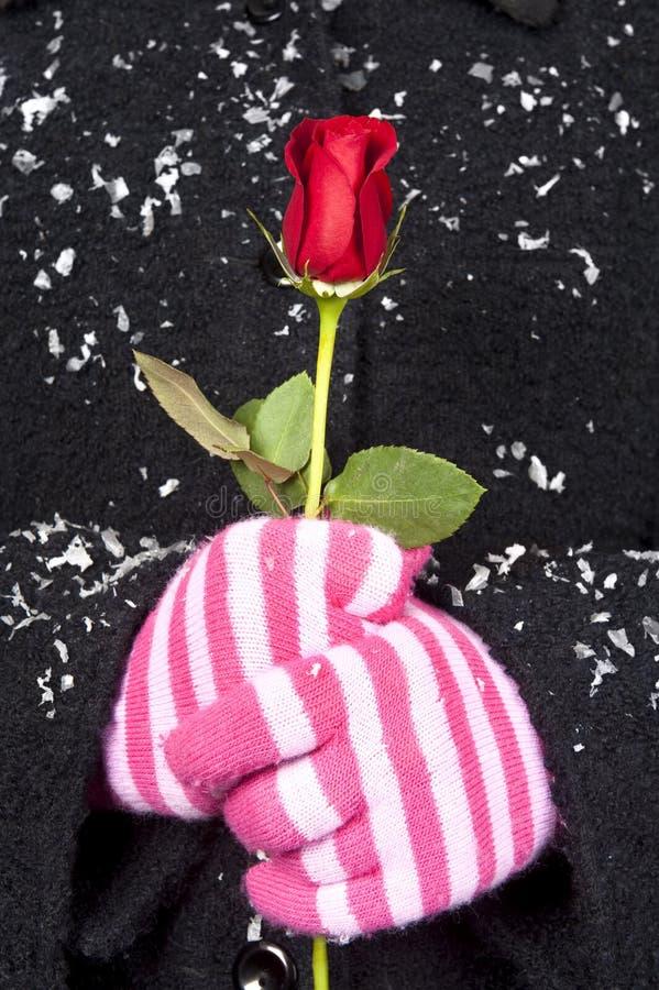 держать женщину wintertime красного цвета розовую стоковые изображения
