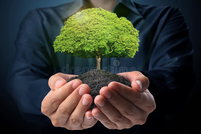 Позеленейте дерево в руке стоковая фотография