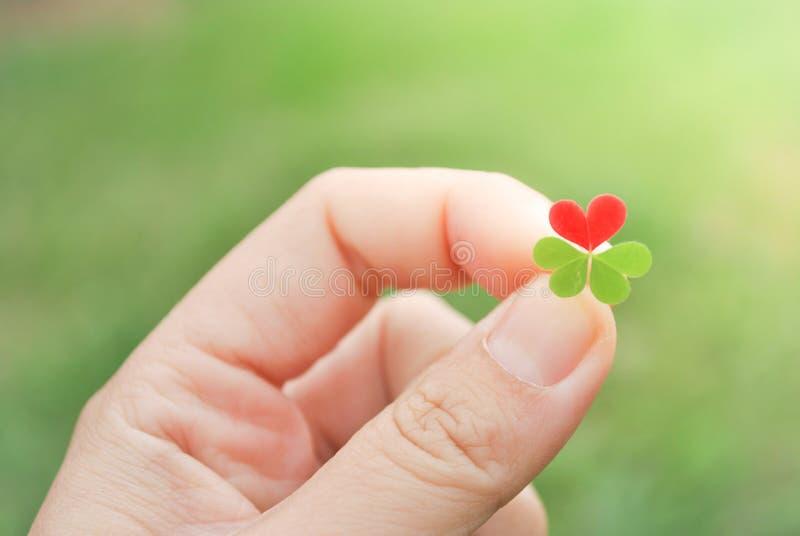 Держать красные лист клевера сердца стоковое фото rf