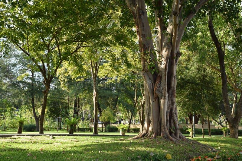 Держите затишье и полюбите дерево стоковые фото