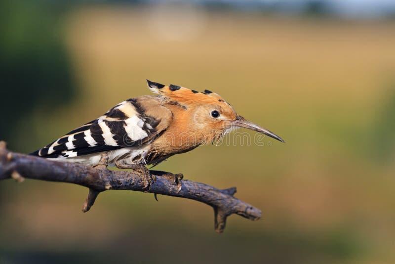 Держите затишье и продолжайте, птица прячет стоковые изображения
