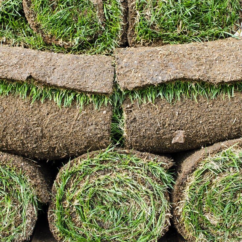 Дерновина травы стоковые изображения rf