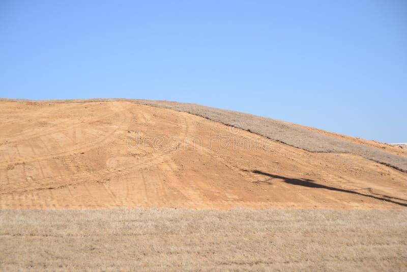 Дерн на лужайке стоковая фотография