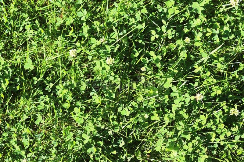 Детализированный близко вверх по взгляду на поверхностях зеленой травы стоковые фотографии rf