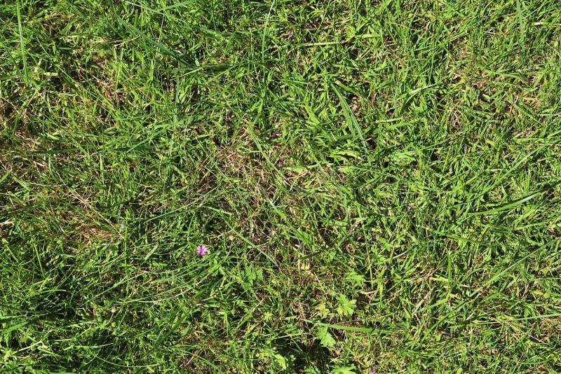 Детализированный близко вверх по взгляду на поверхностях зеленой травы стоковая фотография