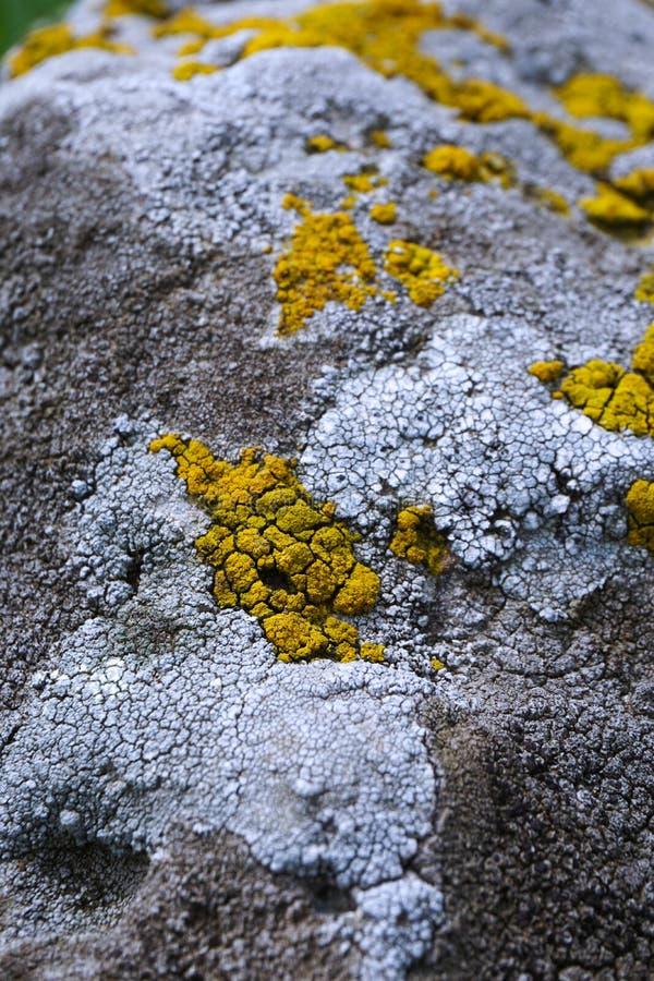 Детализированный взгляд выдержанного камня покрытого с желтыми и белыми лишайниками стоковая фотография rf
