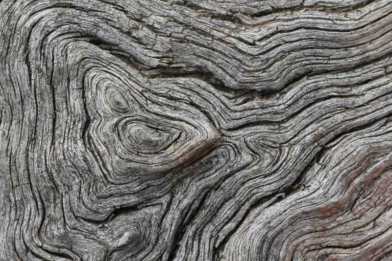 детализирует старую древесину стоковые фото