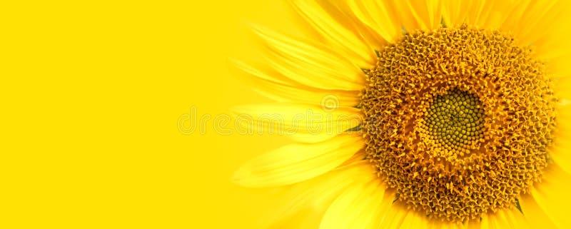 Детали конца-вверх солнцецвета против фото макроса предпосылки желтого знамени широкого стоковые изображения rf