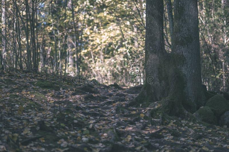 детали леса в последней осени на сельской местности со стволами дерева, покрашенными листьями и пустыми ветвями в солнечном дне п стоковая фотография