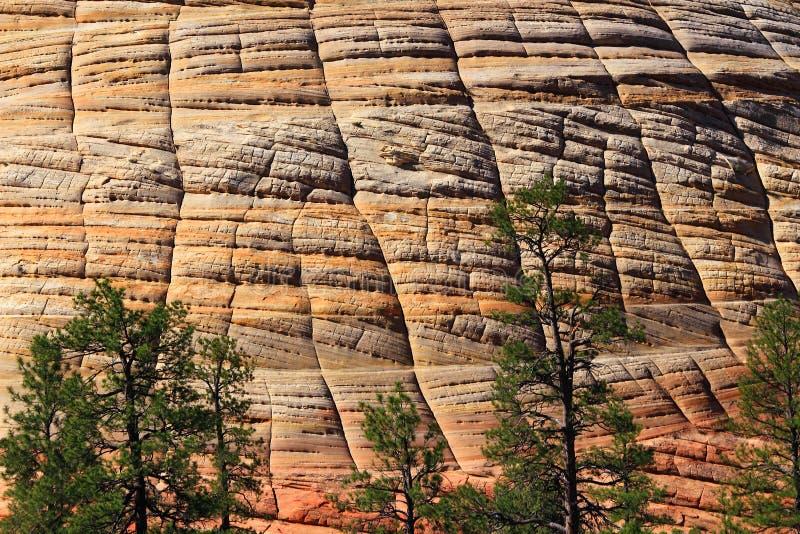 Детали мезы шахматной доски окаменевали Sanddune, национальный парк Сион, Юта стоковое изображение rf