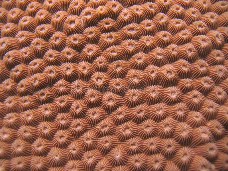 деталь коралла трудная стоковое изображение
