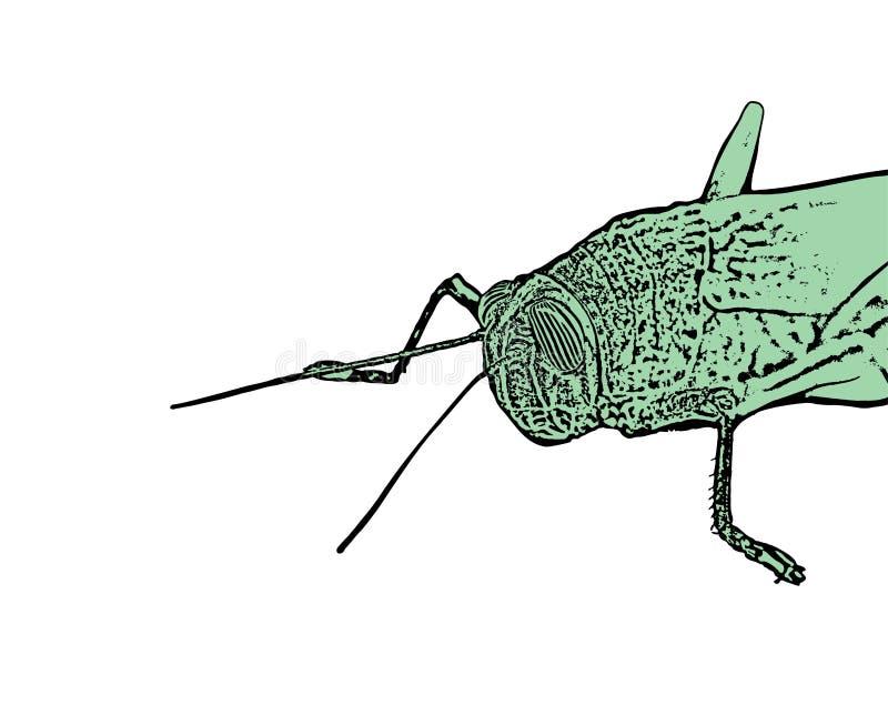 Деталь насекомого кузнечика иллюстрация вектора