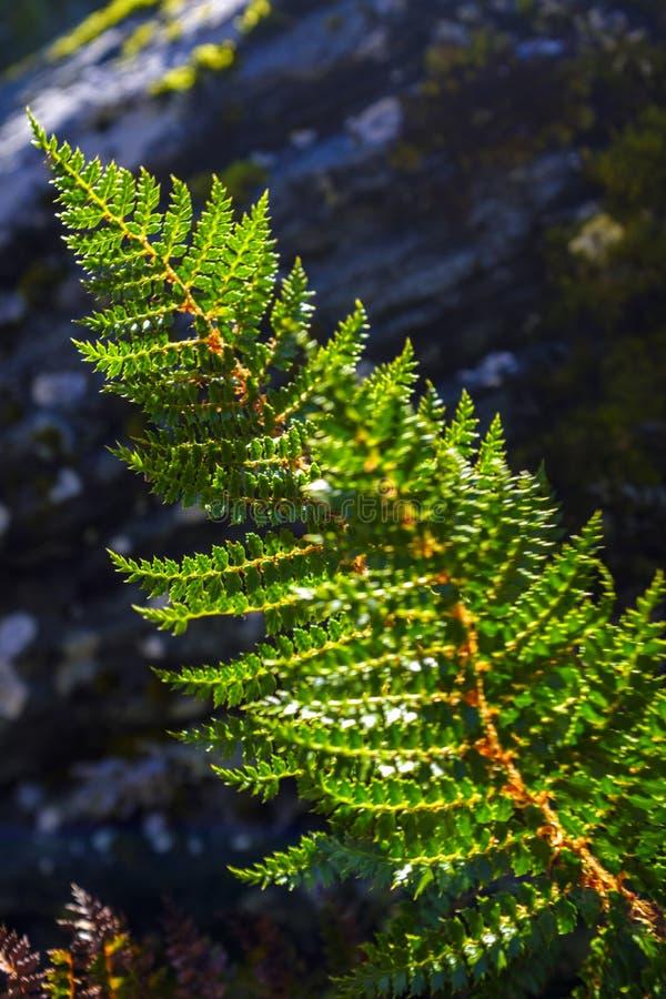 Деталь одичалого папоротника в лесе стоковое изображение rf
