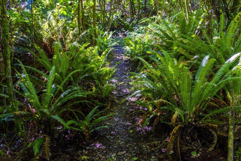 Деталь одичалого папоротника в лесе стоковое фото