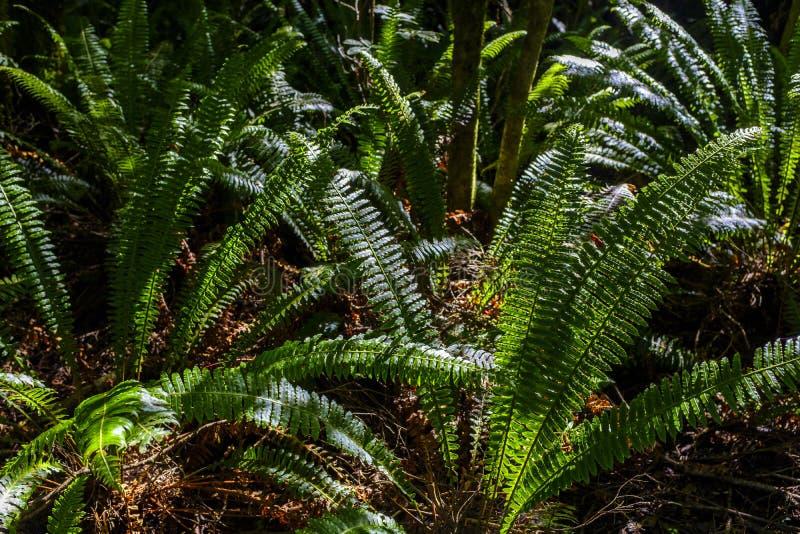 Деталь одичалого папоротника в лесе стоковые фото