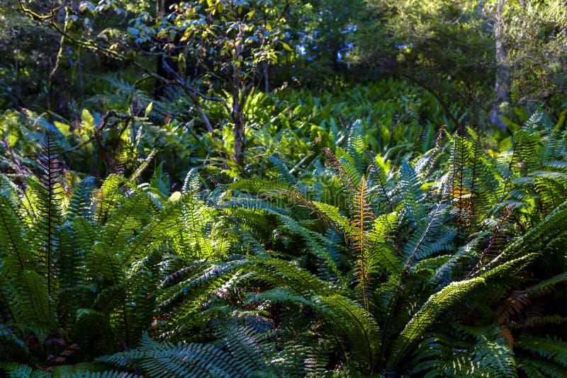 Деталь одичалого папоротника в лесе стоковые фотографии rf