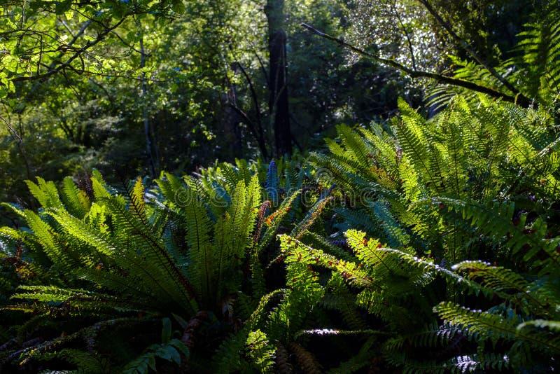 Деталь одичалого папоротника в лесе стоковое изображение
