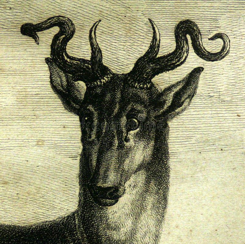 Деталь оленей антиквариатов главная вытравляя стоковое изображение