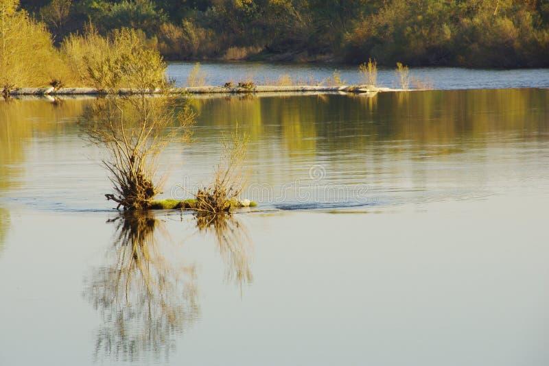 Деталь реки Ardèche стоковое изображение