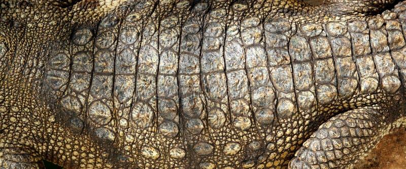 Деталь текстуры макроса кожи живого крокодила реальная стоковое фото rf