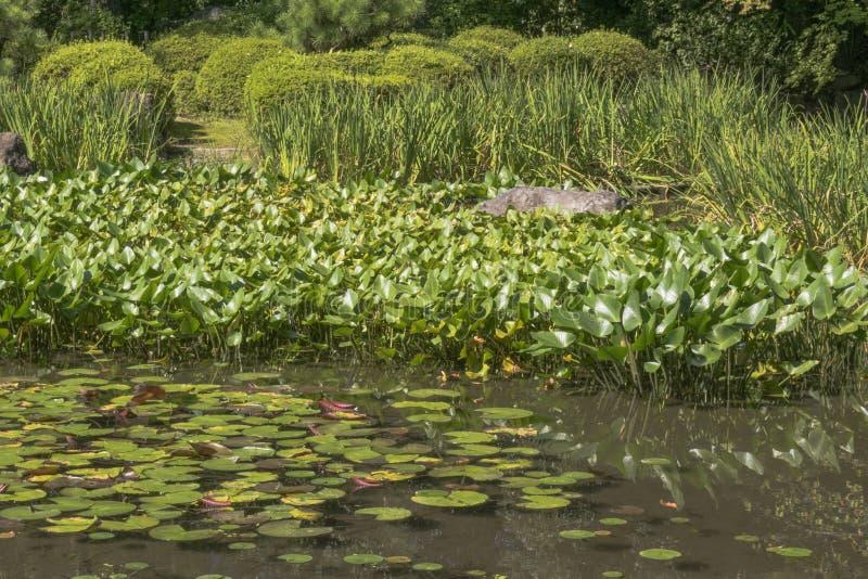 Деталь японского пруда сада стоковые фотографии rf
