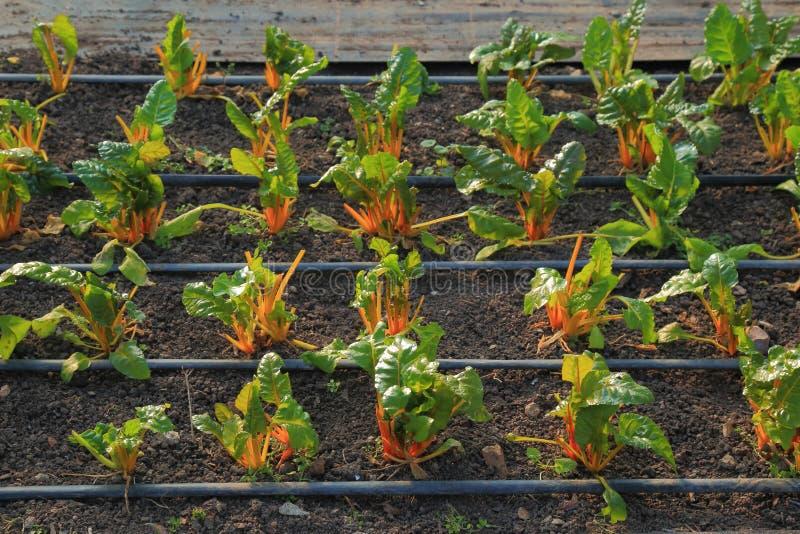 Деталь vegetable фермы стоковые изображения